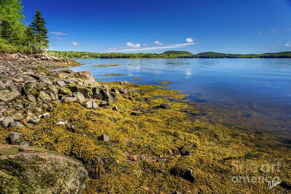 Photograph - St Croix River Shoreline by Alana Ranney