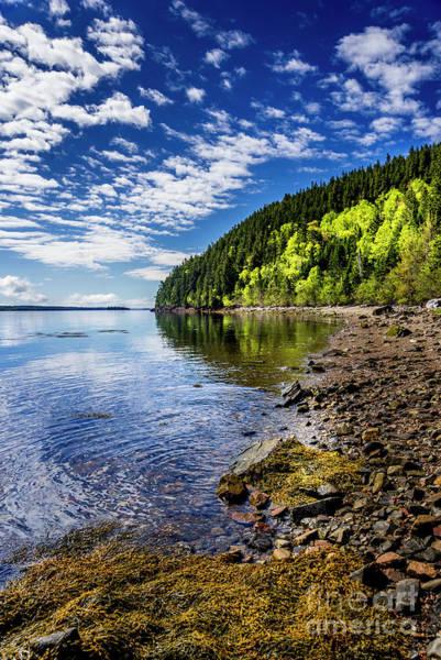 Photograph - St Croix River Shoreline II by Alana Ranney