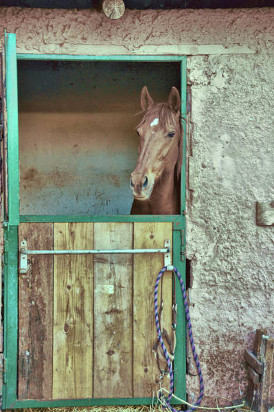 Photograph - Stable Colors by JAMART Photography