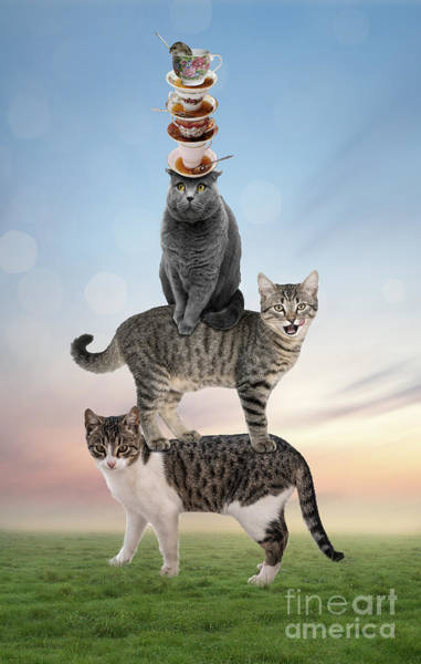 Photograph - Stack Cats by Juli Scalzi