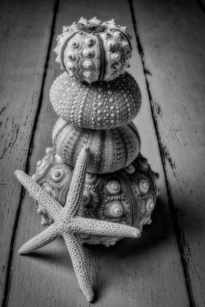 Wall Art - Photograph - Stacked Sea Urchins And Starfish Black And White by Garry Gay