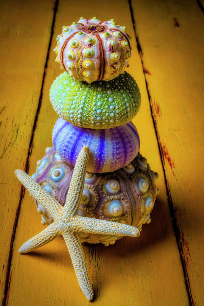 Wall Art - Photograph - Stacked Sea Urchins And Starfish by Garry Gay