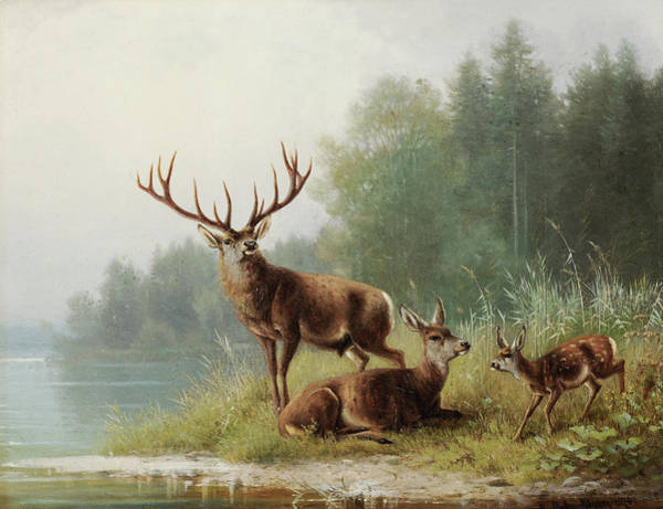 Wall Art - Painting - Stag At A Lake by Moritz Muller