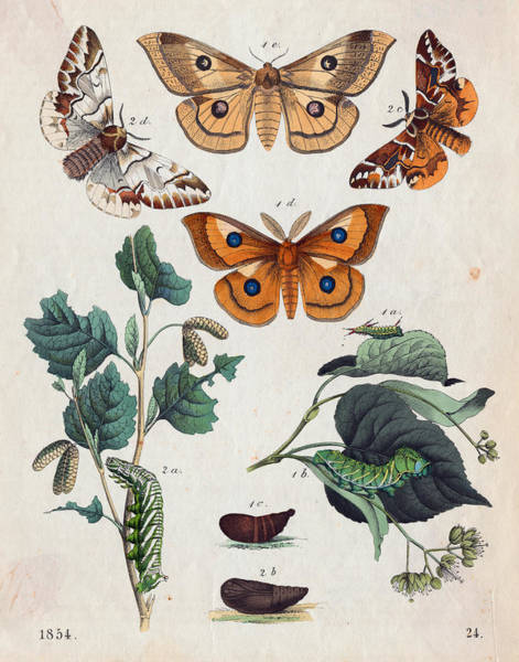 Photograph - Stages Of Butterfly Change by Bettmann
