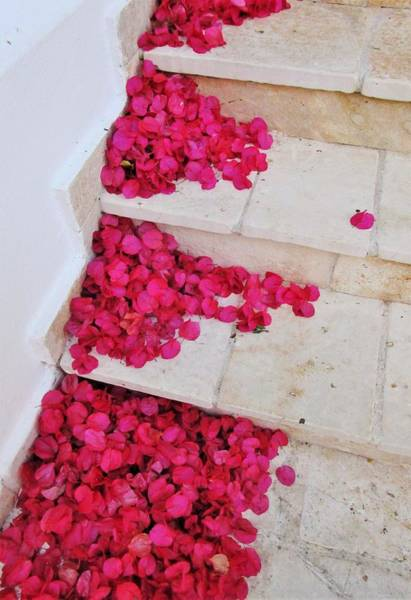 Photograph - Stair Steps Of Petals by Rosita Larsson