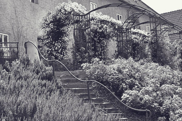 Photograph - Stairs In Rose Garden. Monochrome by Jenny Rainbow