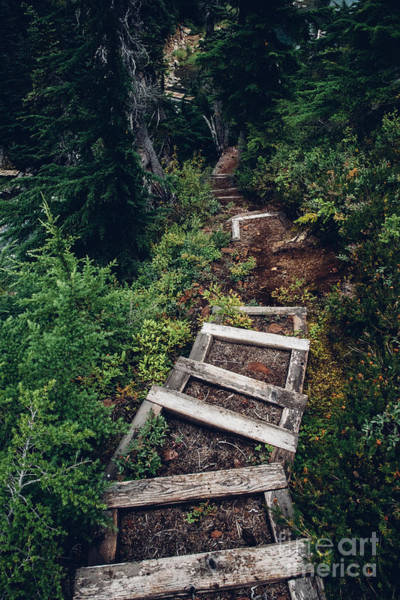 Exploration Wall Art - Photograph - Stairs Lead Down Through The Forest by Jeffrey Mitchell