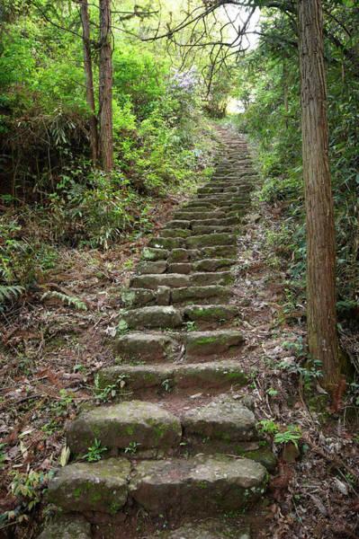 Vertical Garden Photograph - Stairs To Heaven by Sandsun