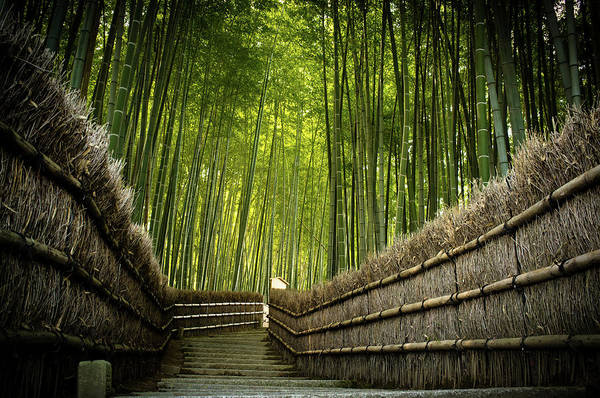 Wall Art - Photograph - Stairway In The Bamboo Grove by Marser
