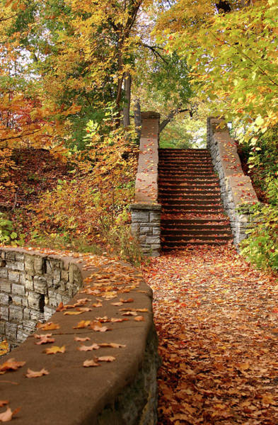 Yellow Brick Road Wall Art - Photograph - Stairway To The Forest by Wweagle