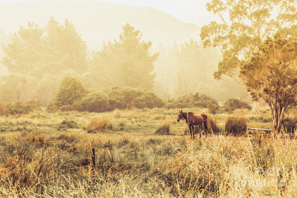 Pasture Wall Art - Photograph - Stallion Homestead by Jorgo Photography - Wall Art Gallery