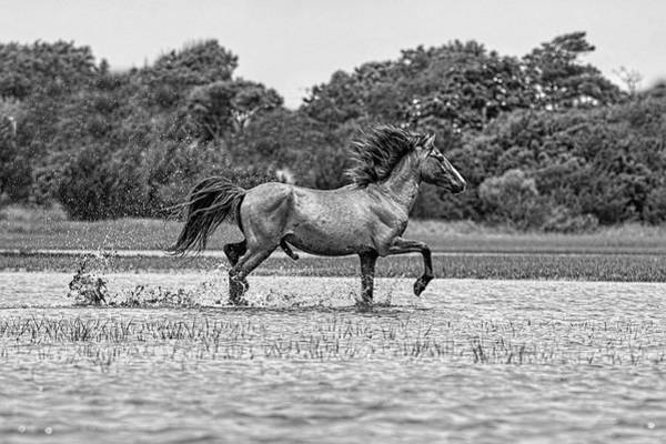 Photograph - Stallion Showing Off by Dan Friend