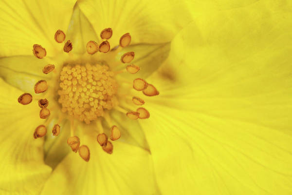 Photograph - Stamen by Billy Currie Photography