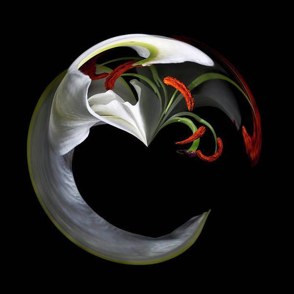 Digital Art - Stamens Galore by Cyndy Doty