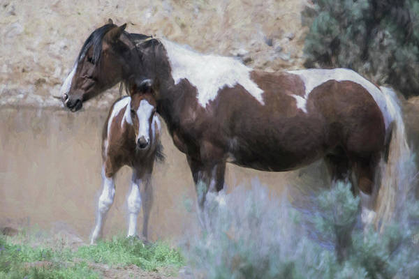 Photograph - Stand By Mom Painterly - South Steens Mustangs by Belinda Greb