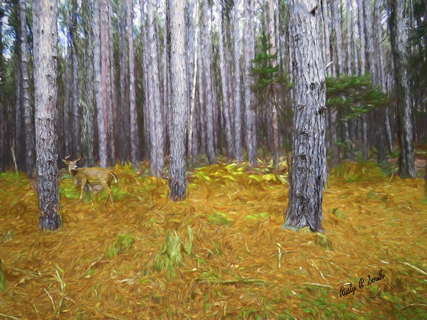 Photograph - Stand Of Pines And Whitetailed Buck. by Rusty R Smith