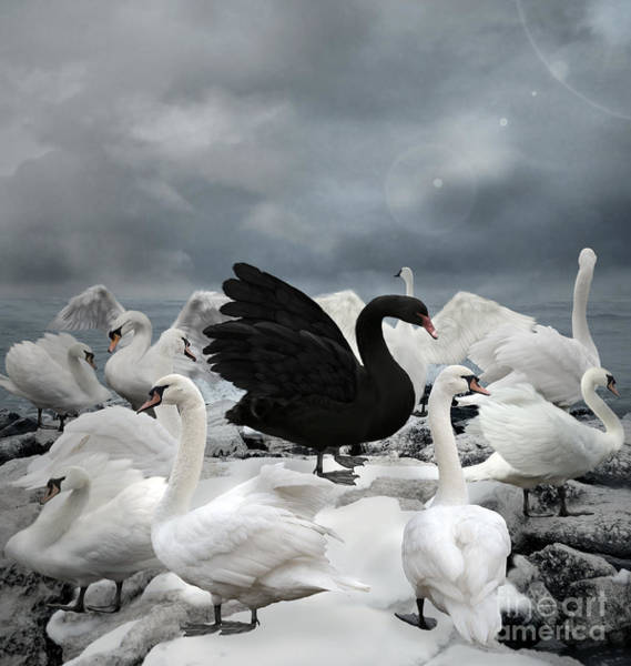 Wall Art - Digital Art - Stand Out Of The Crowd - The Black Swan by Ellerslie