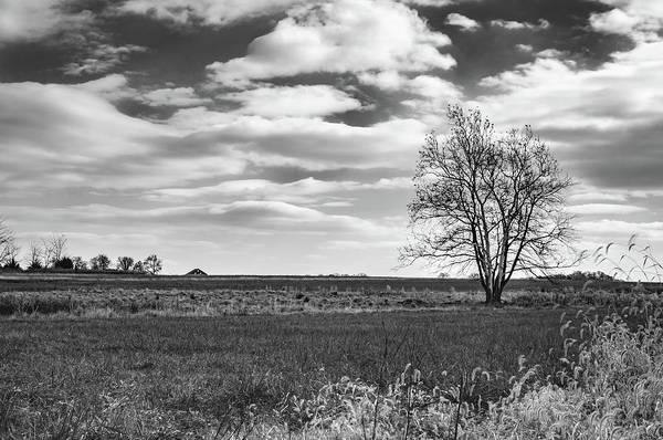Photograph - Standing Alone by Dan Urban