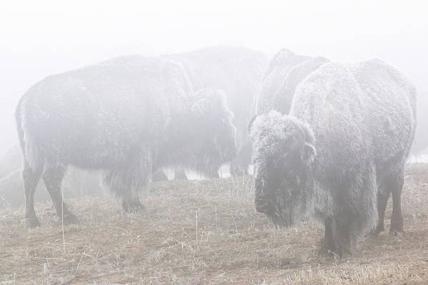 Wall Art - Photograph - Standing In The Frozen Fog by Brian Gustafson