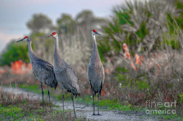 Art Print featuring the photograph Standing Sandhills by Tom Claud