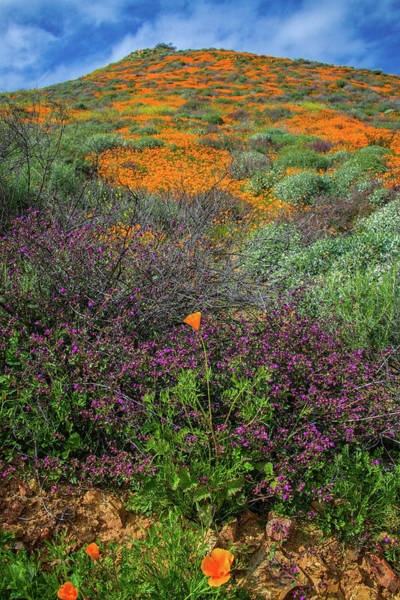 Photograph - Standout Wildflowers Of The 2019 Spring Bloom In Walker Canyon by Lynn Bauer