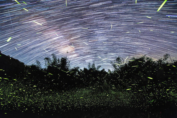Wall Art - Photograph - Star And Firefly Trails At Fujian Tulou by Jeff Dai