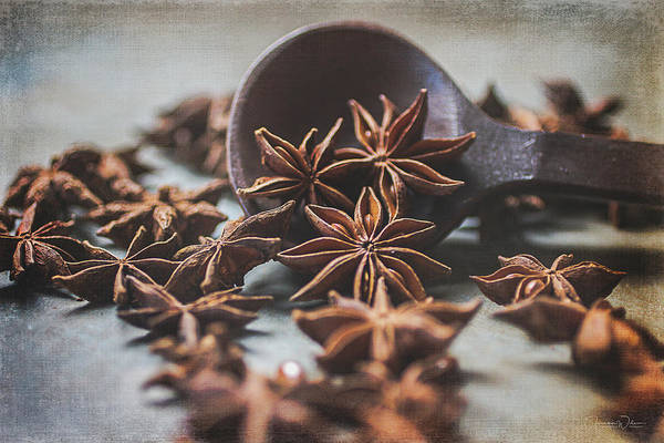 Photograph - Star Anise 4825 By Tl Wilson Photography  by Teresa Wilson