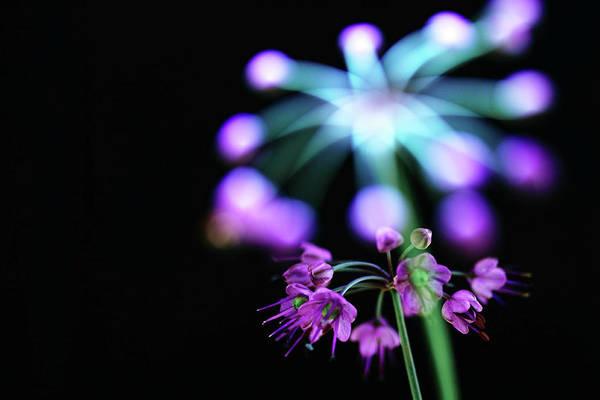 Bethlehem Photograph - Star Flower by Char