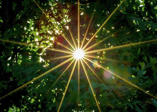 Cedar Tree Photograph - Star Shaped Sunburst Breaking Through by Lotus Carroll