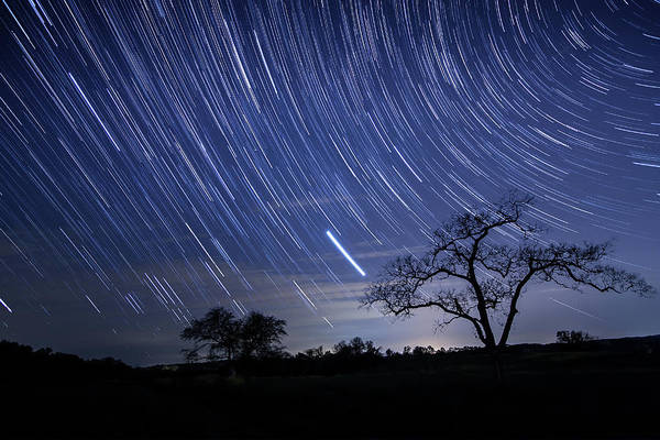 Silhouette Photograph - Star Trails And Tree Silhouette by Michael Lawrence Photography