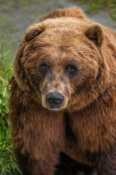 Photograph - Stare Down by Roy Nelson
