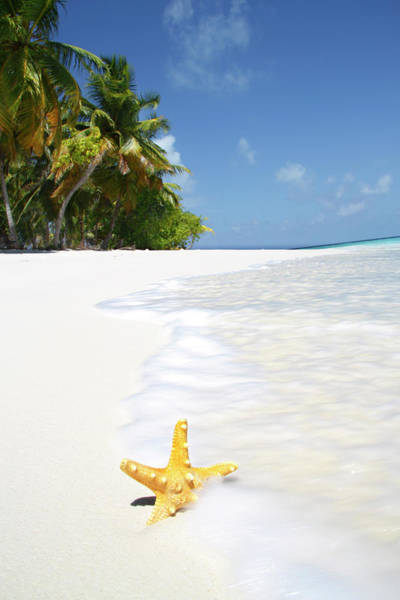 The Maldives Photograph - Starfish At Waters Edge On Tropical by Peter Cade