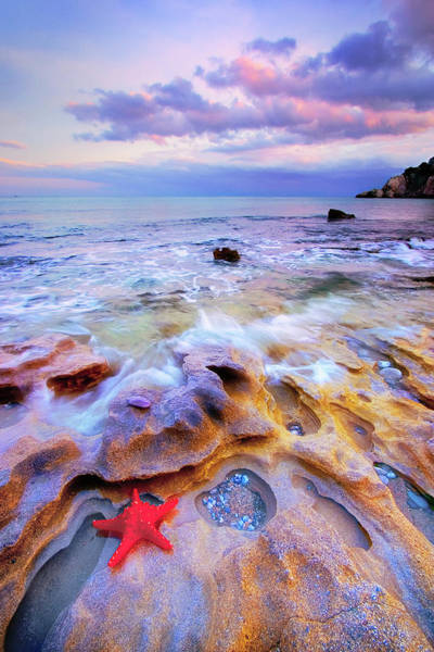 Wall Art - Photograph - Starfish by Giovanni Allievi