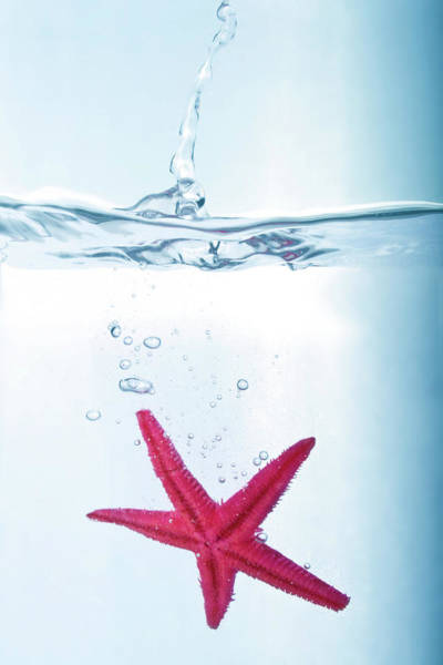 Starfish In Water Art Print