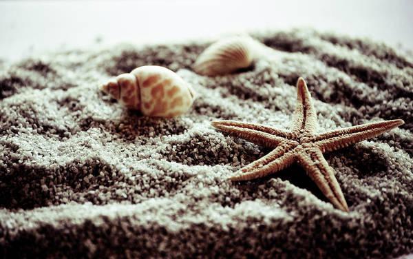 Three Seashells Photograph - Starfish by Marina De La Rosa