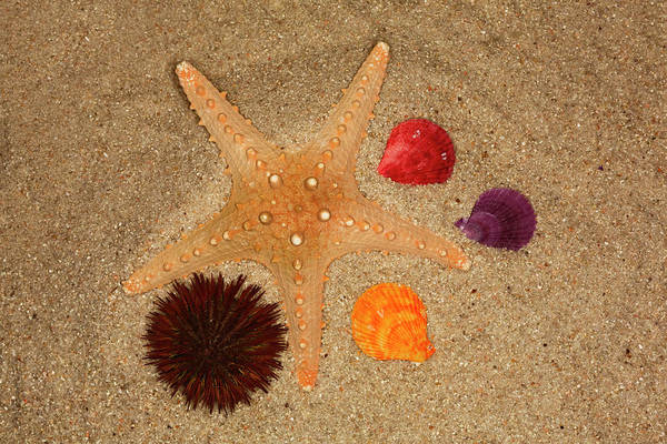 Wall Art - Photograph - Starfish, Urchin And Shells In The Sand by Adam Jones