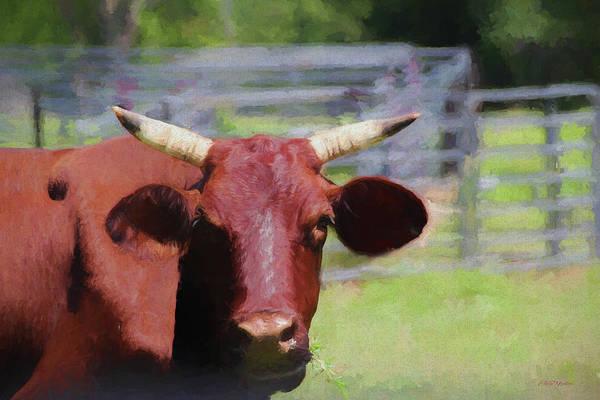 Painting - Staring Steer 1390 - Painted by Ericamaxine Price