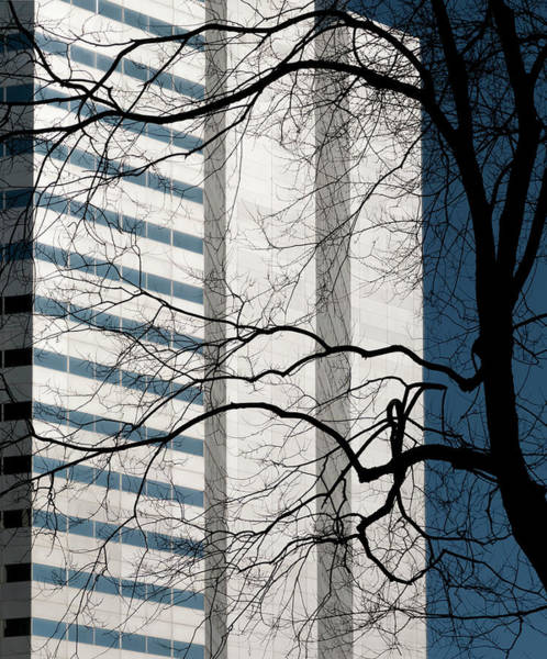 Quebec City Photograph - Stark Bare Trees And Office Building by Stuart Mccall