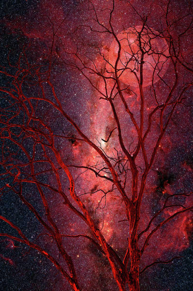 Wall Art - Photograph - Stars And Mars In Winter by Dan Carmichael