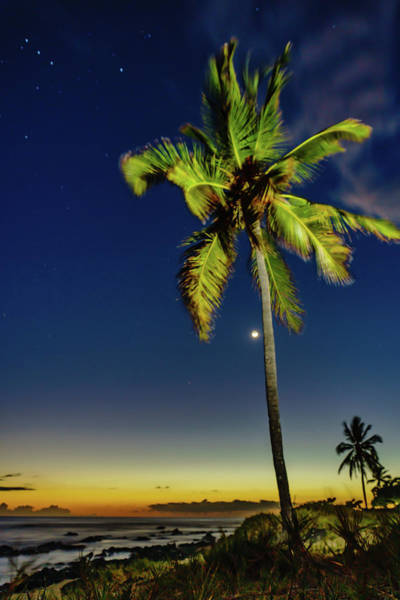 Photograph - Stars - Palms - Moon -sea by John Bauer