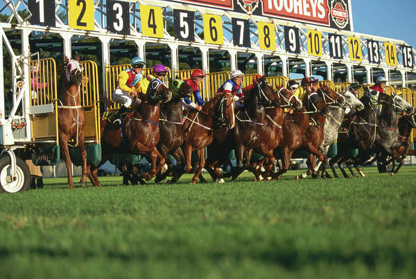 New South Wales Photograph - Start Of Horse Race, Sydney, New South by Oliver Strewe