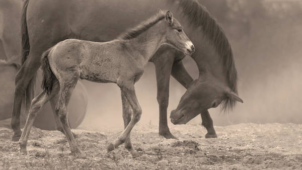Heber Springs Photograph - Stately Colt. by Paul Martin
