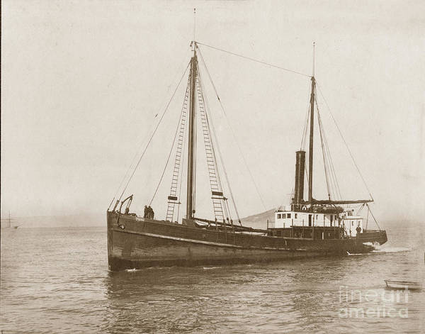 Photograph - Steam Schooner Cleone Circa 1915 by California Views Archives Mr Pat Hathaway Archives