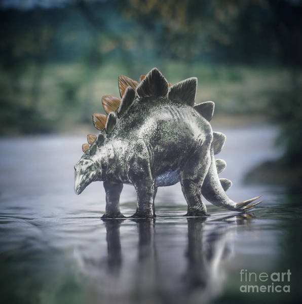 Photograph - Stegosaurus Standing In Water by Warren Photographic