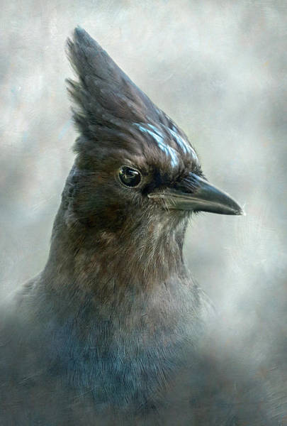 Wall Art - Photograph - Steller Jay Portrait by Angie Vogel