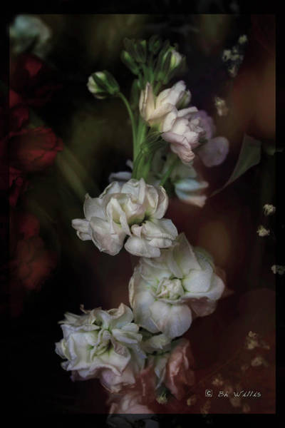 Photograph - Stem Of Flowers by Bonnie Willis