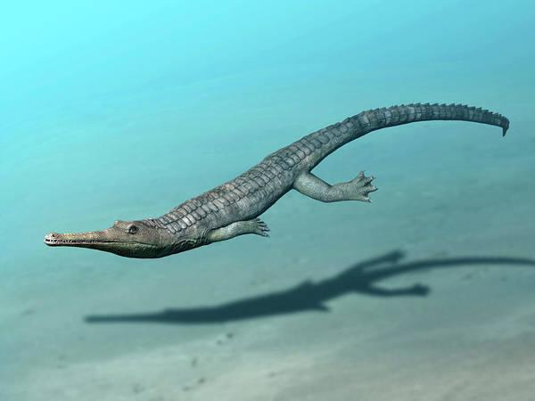 Photograph - Steneosaurus Bollensis Swimming by Nobumichi Tamura