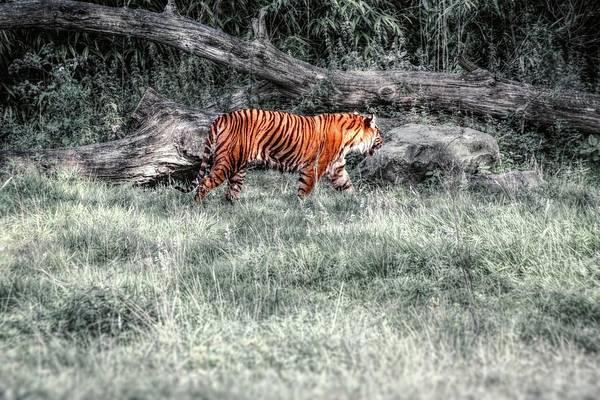 Photograph - Steps In The Shadows by Jaroslav Buna