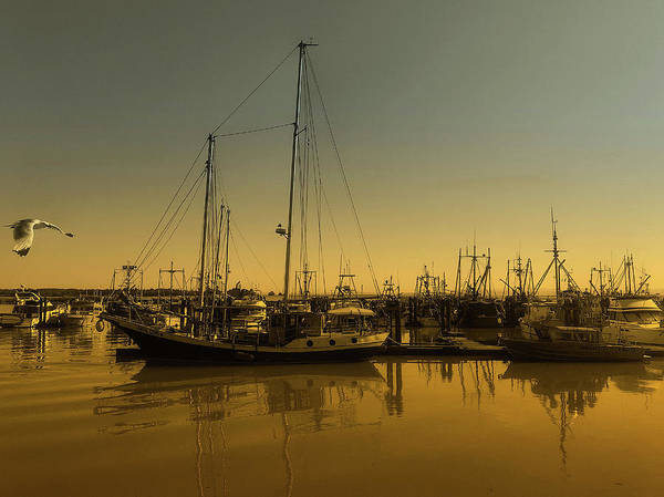 Photograph - Steveston by Connie Handscomb