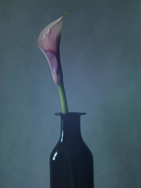 Calla Photograph - Still Life Of A Lily Flower In A Vase by Win-initiative